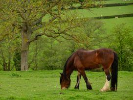 The Shire Hut - North Wales - 955259 - thumbnail photo 14
