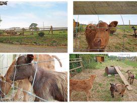 Mill - Cornwall - 959065 - thumbnail photo 20