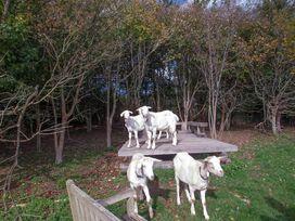 Treetops Lodge - Devon - 959682 - thumbnail photo 25
