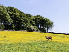 The Old Hen Shed - Yorkshire Dales - 959789 - thumbnail photo 17