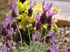 Ramblers Cottage - Northumberland - 961846 - thumbnail photo 12