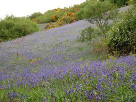 Ramblers Cottage - Northumberland - 961846 - thumbnail photo 14