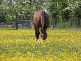 Crane Field Laithe - Yorkshire Dales - 962454 - thumbnail photo 39