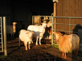 Bluebell Lodge - Cornwall - 962651 - thumbnail photo 12