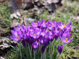 Oak Cottage - Scottish Highlands - 965821 - thumbnail photo 36