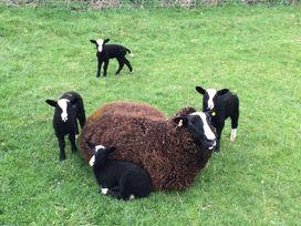 Shepherd's View - Shropshire - 968475 - thumbnail photo 17