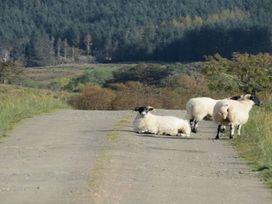 Craigard Cottage - Scottish Highlands - 972518 - thumbnail photo 10