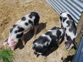 Battens - Devon - 976059 - thumbnail photo 18