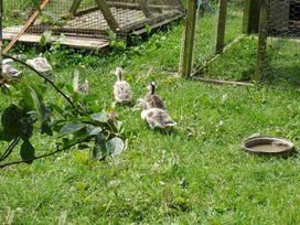 Badger Cottage - Cornwall - 976529 - thumbnail photo 22