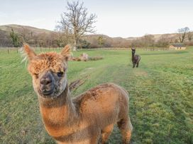 Alpaca Cabin - Mid Wales - 981008 - thumbnail photo 24