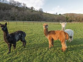 Alpaca Cabin - Mid Wales - 981008 - thumbnail photo 25