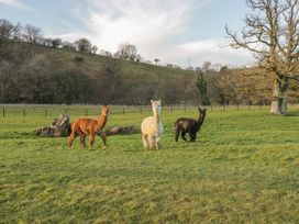 Alpaca Cabin - Mid Wales - 981008 - thumbnail photo 26