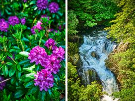 West Lodge - Scottish Lowlands - 982621 - thumbnail photo 30