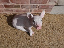 The Piggery - Herefordshire - 985932 - thumbnail photo 33