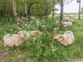 Mappowder Cottage - Dorset - 988342 - thumbnail photo 23