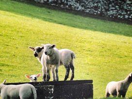 Walnut Barn - Cotswolds - 988735 - thumbnail photo 27