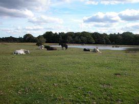 Pop's Barn - Somerset & Wiltshire - 988934 - thumbnail photo 10