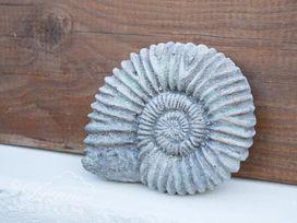 Ammonite Cottage - Dorset - 993922 - thumbnail photo 23