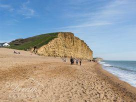 Seagulls, West Bay - Dorset - 994651 - thumbnail photo 16