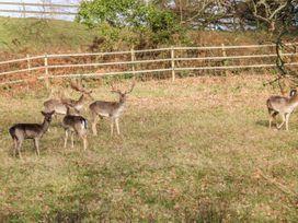 Roughwood - South Coast England - 996886 - thumbnail photo 15