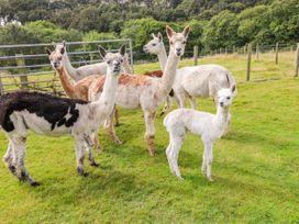 Shepherds Hut - The Hurdle - South Wales - 997062 - thumbnail photo 22