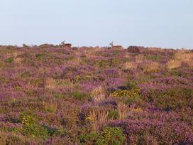 Quantock Hide - Somerset & Wiltshire - 997164 - thumbnail photo 30