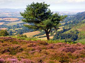 Quantock Hide - Somerset & Wiltshire - 997164 - thumbnail photo 27