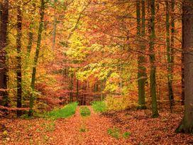 Quantock Hide - Somerset & Wiltshire - 997164 - thumbnail photo 29