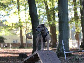 Quantock Hide - Somerset & Wiltshire - 997164 - thumbnail photo 23