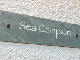 Sea Campion - Devon - 998671 - thumbnail photo 3