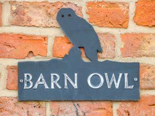Barn Owl - 1010330 - photo 4