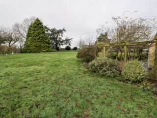 Wych Elm - 1034067 - photo 38