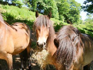 Higher Bumsley Barn - 1046399 - photo 22