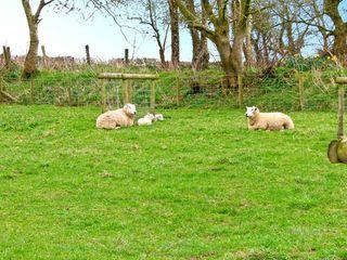 Treffgarne Farm Cottage - 13363 - photo 10