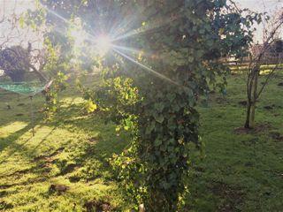 Orchard Cottage - 13806 - photo 15