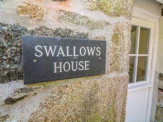 Swallows - 26701 - photo 2