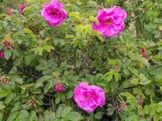 Woodside Chalet - 31225 - photo 10