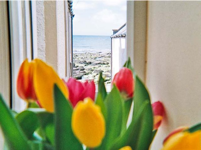 Ellie-Ann Cottage - 8887 - photo 1