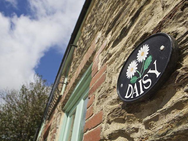 Daisy - 995382 - photo 1