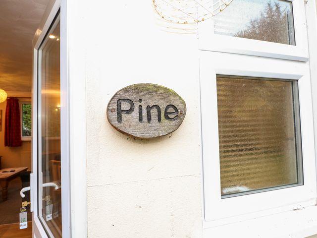 Pine - 999580 - photo 1