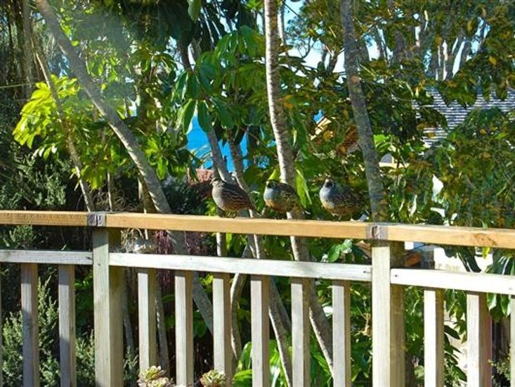 Birds on  the Deck