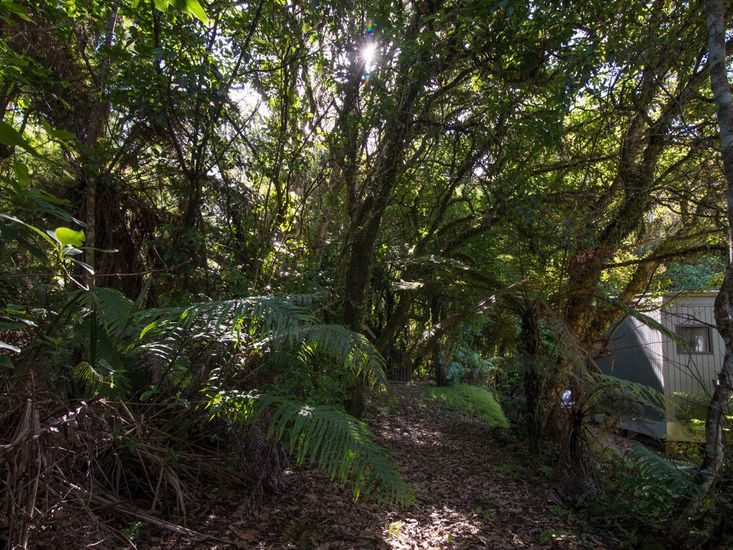Native bush surrounding property