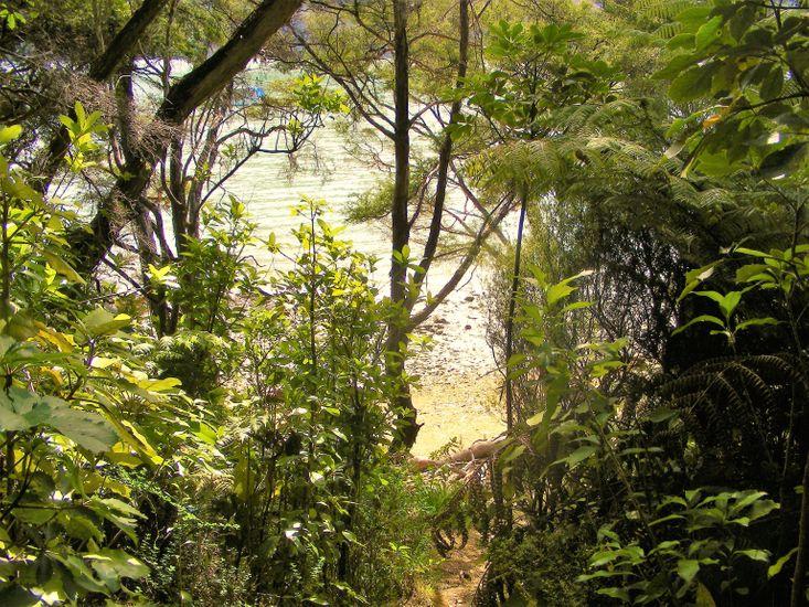 Bush Path to Private Beach