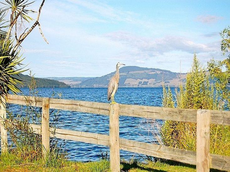 Blue Heron Lodge - Resident Blue Heron - Lake 25m from deck
