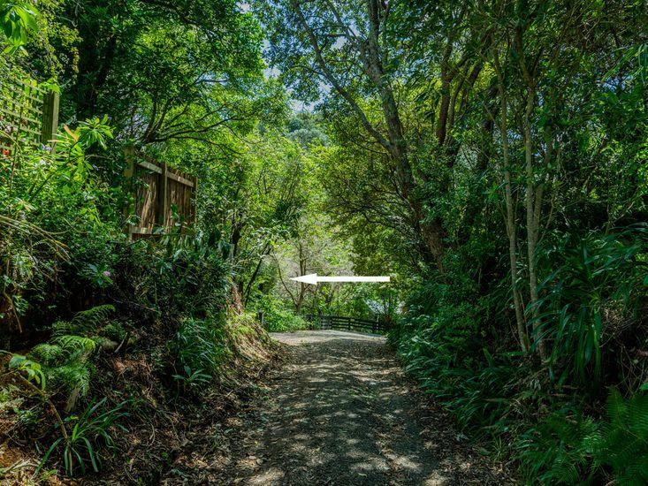Bush Walkway from Tui's Feast