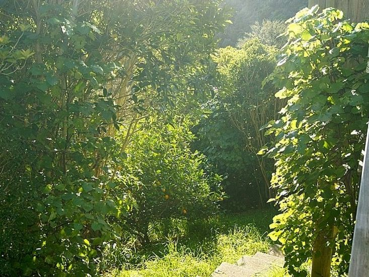 Garden Steps to Bush Henge