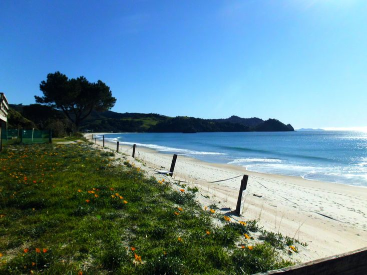 Swell Break - Whangapoua Bach - Beachfront Views - 1 minute stroll from the house