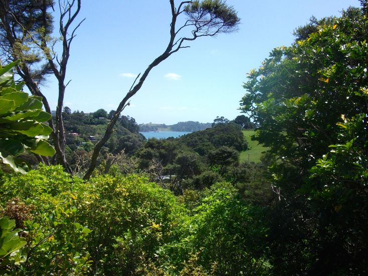 Bush and Sea Views