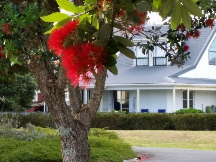 Seaside Cottage - Tairua Holiday Home