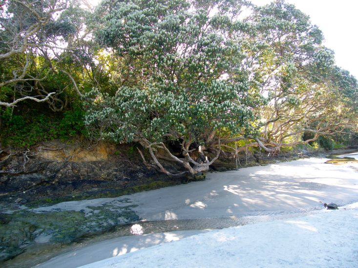 Waipu Cove Stream